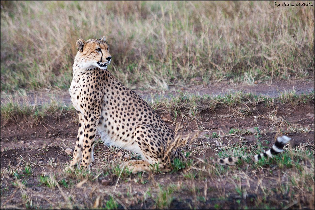 2016-06-29_1D_Serengeti_572_web