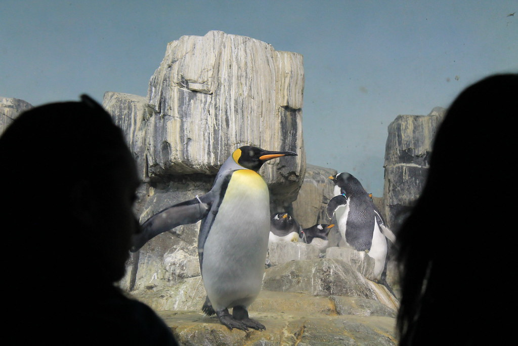 Central Park Zoo (81)