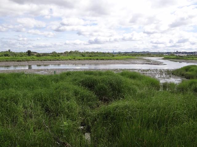 Mill Creek Marsh