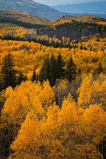 Grand Mesa Color