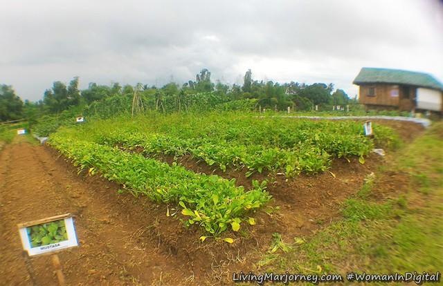 Spinach-Terra-Verde-Ecofarm