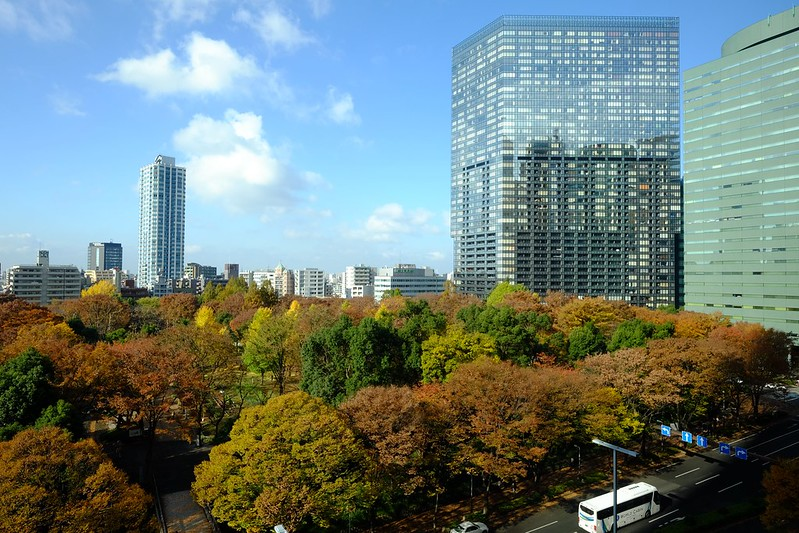 Colored Leaves at Shinjuku Central Park