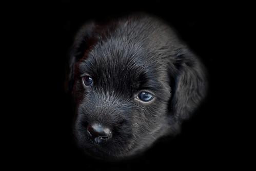 One of Freya's puppies