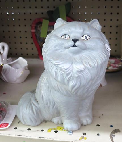 big head cat