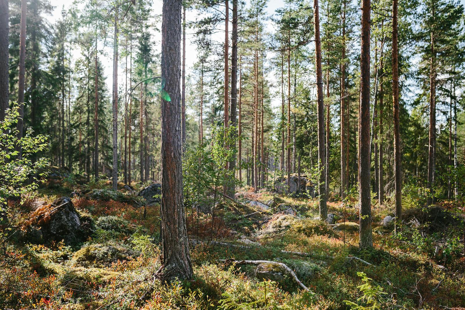 Skogen i eftermiddagssolen - Evelinas Ekologiska