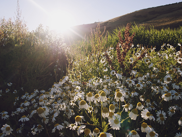 Mansands, Kingswear Devon. Sunset flowers lake