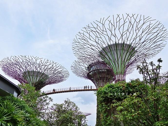 26 新加坡四天三夜自由行 美食美景購物