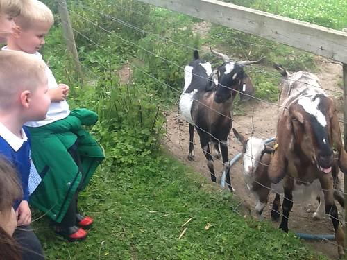 Meeting the animals at Aston Springs Farm.