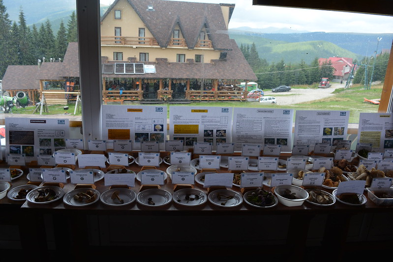 Expozitie ciuperci 2016 Ranca