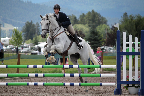 Show Jumping - Open Novice