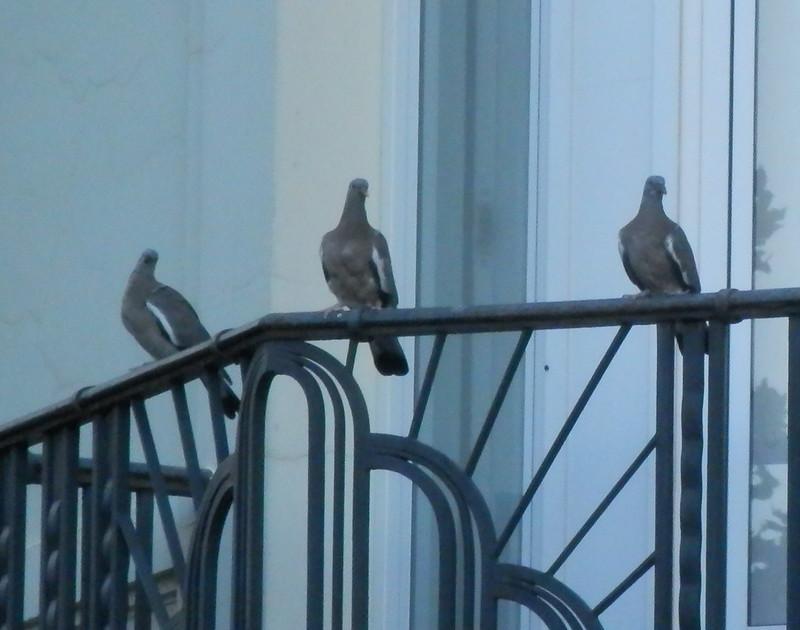 Tres palomas 2