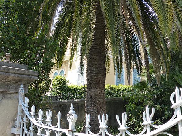 grille et palmier
