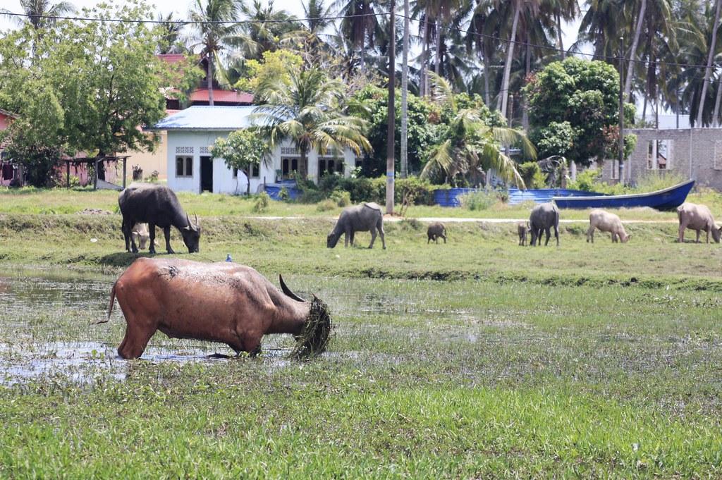 gemalai village langkawi kokemus