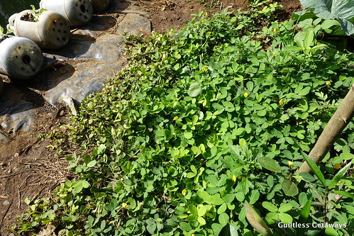 jaya-garden-malaybalay.jpg