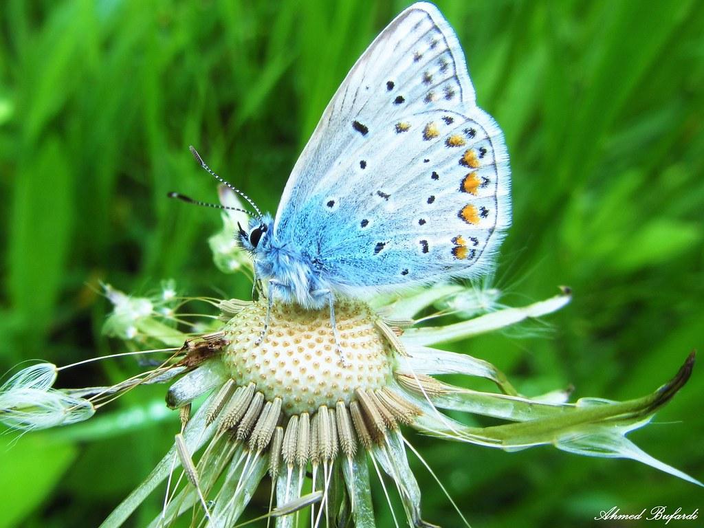 Butterfly 983
