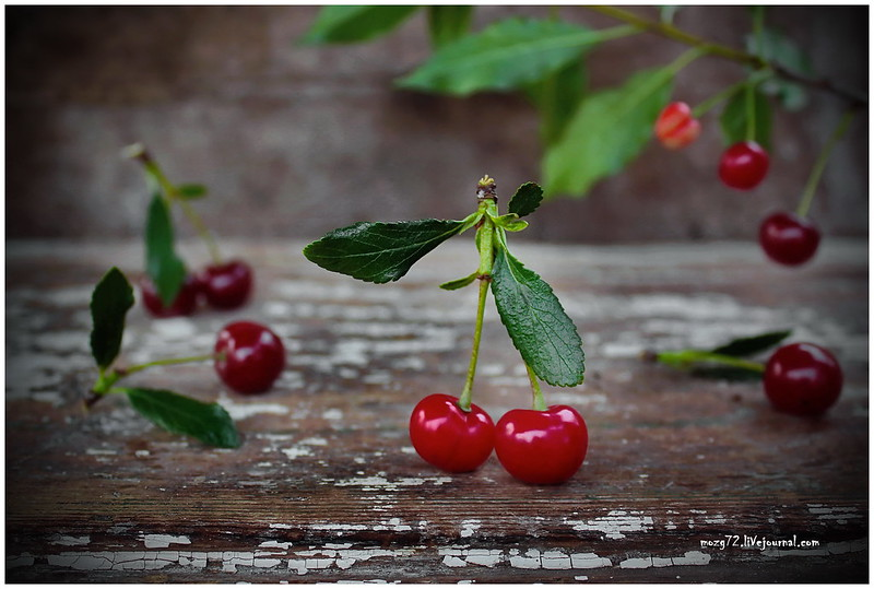 ...cherries on a branch