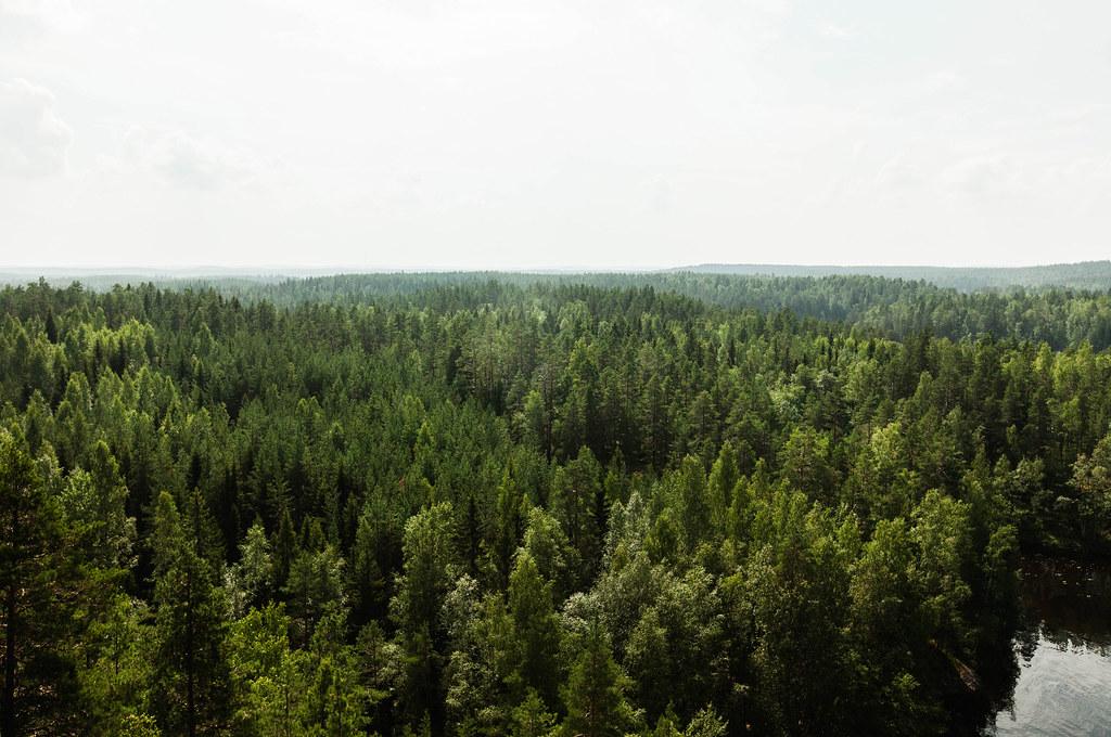 Repoveden kansallispuisto