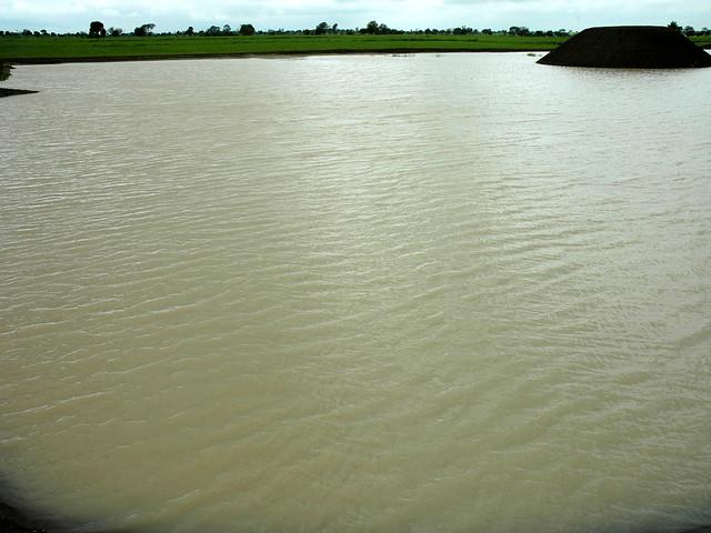 नाले के पानी से भरा तालाब