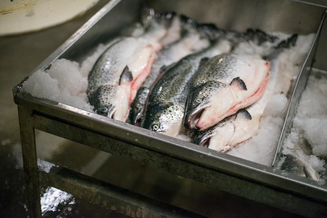 Fulton Fish Market Online
