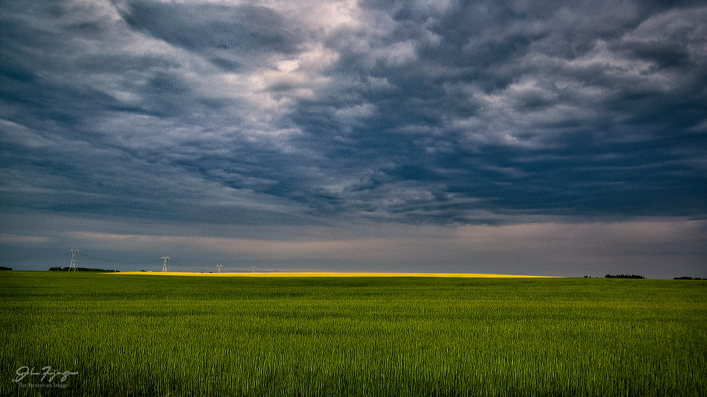 Distant Canola