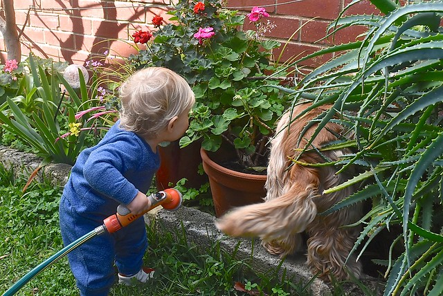 Grandson Jasper and Millie investigate a noise in our garden