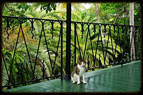 hemingway-cat 3