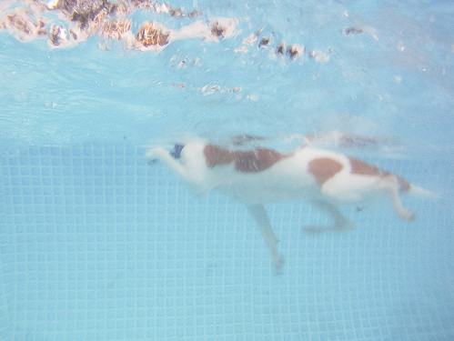 GoPro Pool-8690