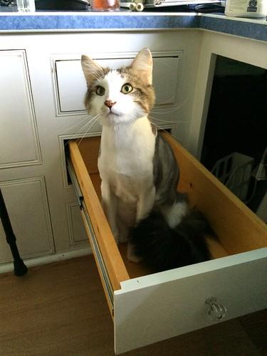 Clark in a box