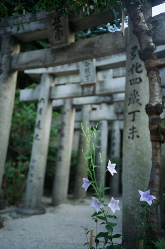 桔梗 / 櫛田神社