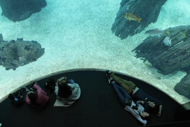 oceanario-lisboa5