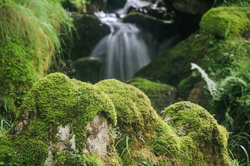 Parque Natural de #Gorbeia #DePaseoConLarri #Flickr - -909