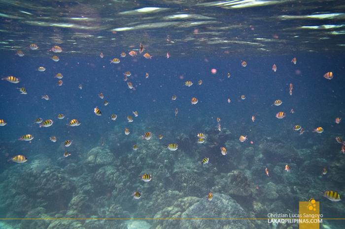 Koh Rok Snorkeling Tour Thailand