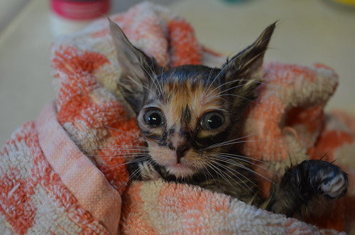 Sad Cats Post-Bath