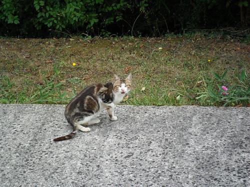 Petite chatte perdue, depuis le 17 septembre dans l'après-midi — quartier de la Petite Arche, Tours-Nord.