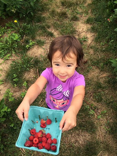 Raspberry Picking 2016