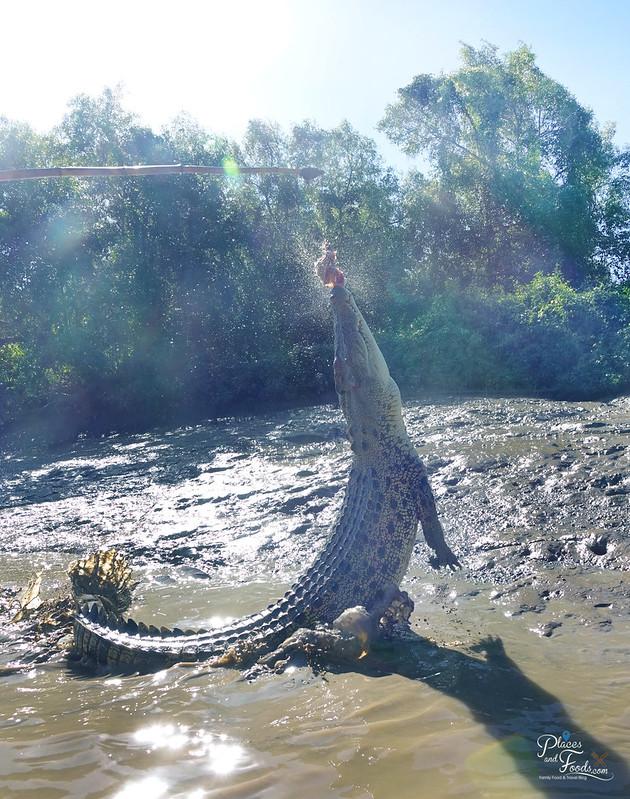 darwin jumping croc