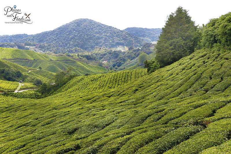 cameron highlands palas mountain view