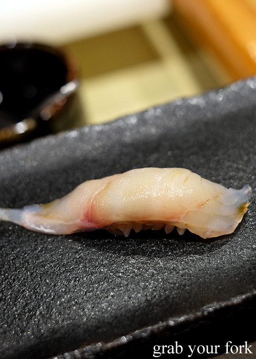 latchet nigiri sushi at Hana Ju-Rin in Crows Nest Sydney