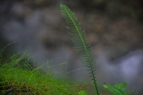 Parque Natural de #Gorbeia #DePaseoConLarri #Flickr - -896