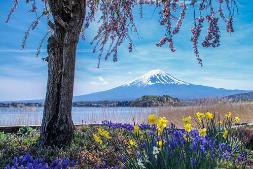2015 Spring Fuji