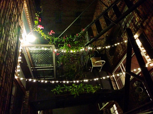 Sasha's Back Patio Garden (September 13 2015)