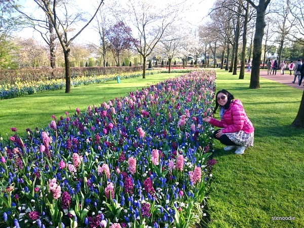 posing next to the tulips at Keukenhof Gardens