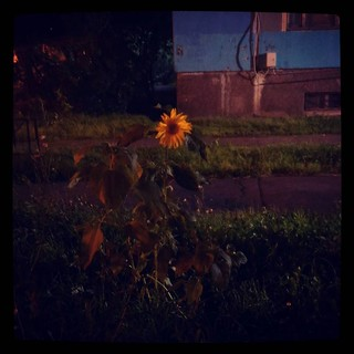 Brightens my late walk home, for #365days project, 215/365