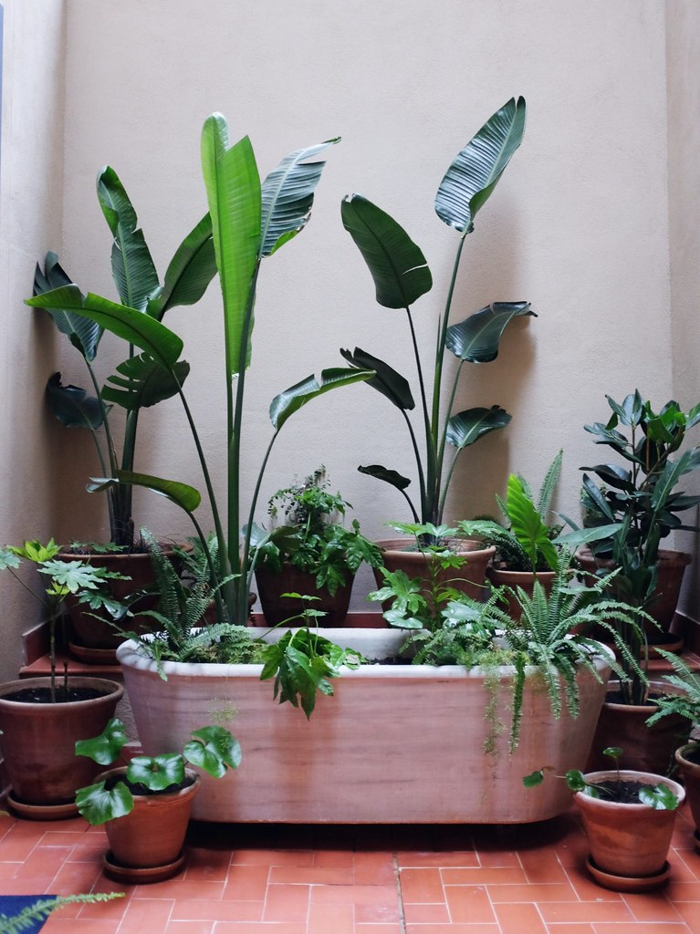 Plant Decoration In Living Room: Decorating With Plants (as Seen In Spain)