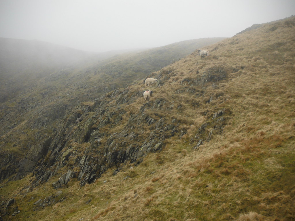 Climbing Redscrees 5
