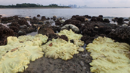Mass coral bleaching at Kusu Island, 7 Jul 2016