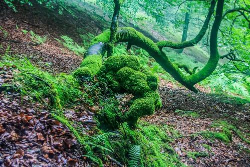 Parque Natural de #Gorbeia #DePaseoConLarri #Flickr - -862