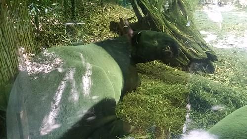 Woodland Park Zoo Not Aardvark