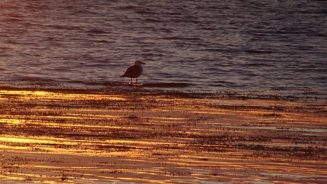 Bird on the Golden Water
