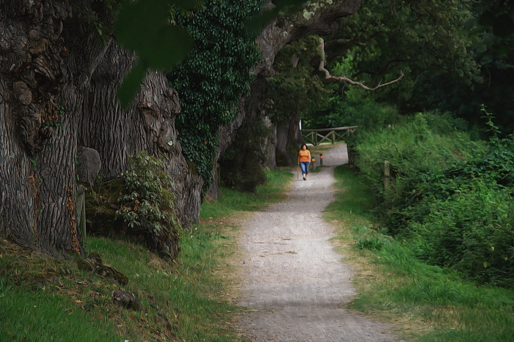 un sendero junto a robles centenarios